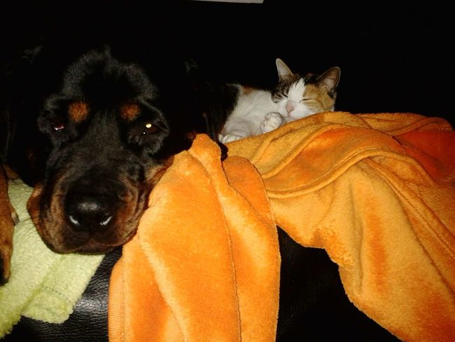 Guten MORGEN wünschen Lilli Mit Freya ♡♥♡♥ Catnapping Ilovemycat Cat♡ Catstar #cat #catnap #catoftheday #catpic #catlovers #catsconnect #catinstagram #catsofinstagram #gato #gatinhos #gatto #garfield #petstagram #premierpet #photooftheday #petsofinstagram #picoftheday #petlovers #instabicho #ilovecats #ilovemypet #issovici Mein Hund Rotti From My Point Of View Dogslife Dogs Of EyeEm Ich Liebe Meinen Hund! Hundeleben