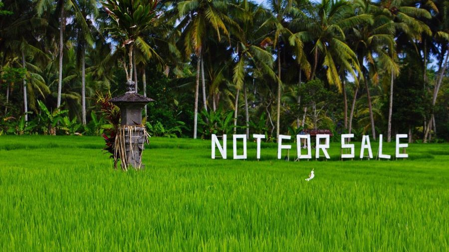 Not For Sale Bali, Indonesia Bali Plant Tree Green Color Grass Growth Land Field Day Nature No People Palm Tree Outdoors Tranquility Beauty In Nature Park Tranquil Scene Tree Trunk Trunk Tropical Climate