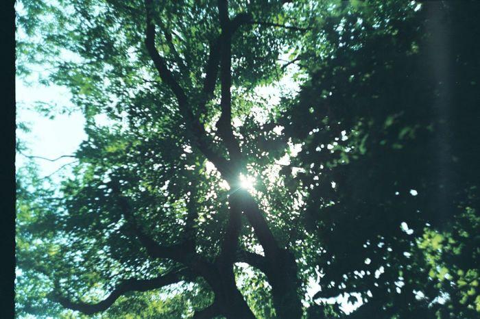 Nature Gulhaneparki Trees Sunlight Light And Shadow Analog Analog Photography Filmisnotdead Zenit-ET Analog Camera