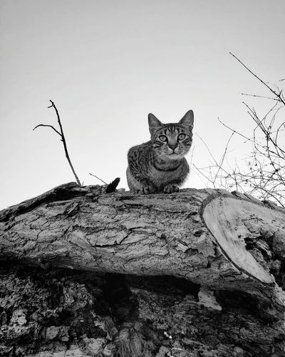 Cat on rock against sky