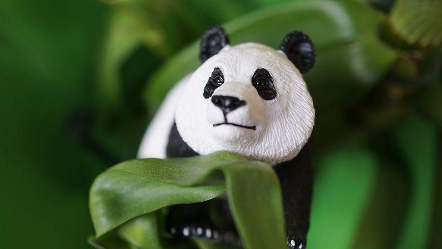 panda Kids Toys