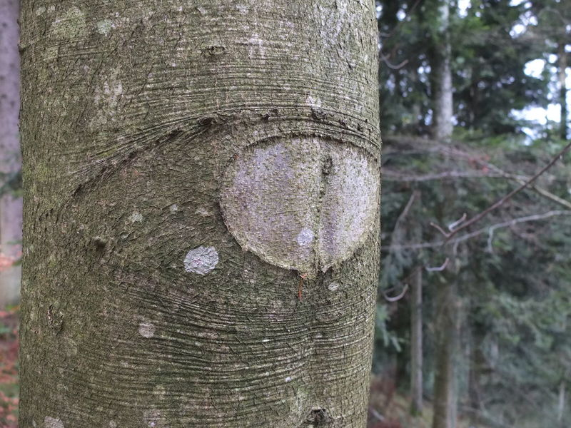Close-up Day Eye Growth Magic Eye Nature No People Outdoors Textured  Tree Tree Trunk