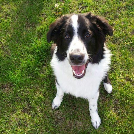 Dogs Dog Love Summer Greengrass Summerlovin Puppy English Shepherds Happydog Ruleofthirds