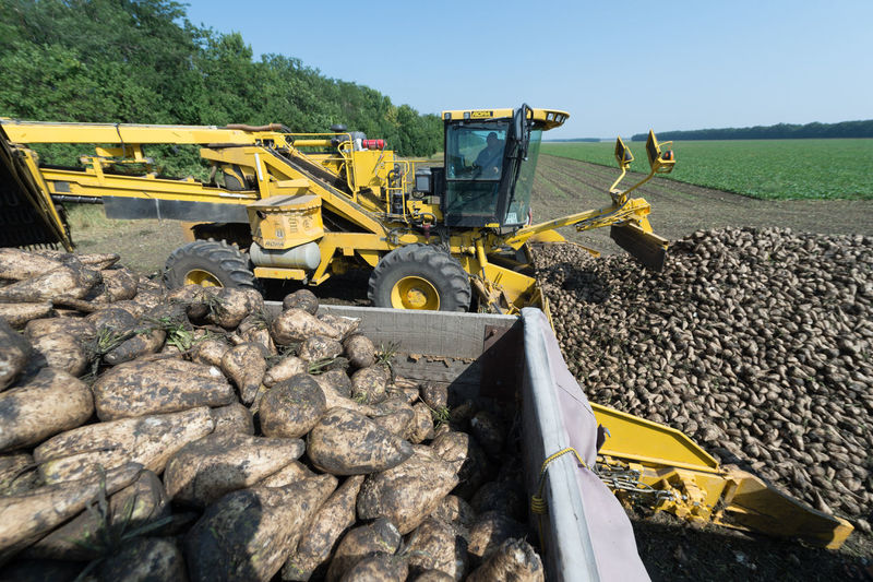 Russia, the Kuban, food industry, sugar factory, harvesting sugar beet Abandoned Abundance Broken Damaged Day Destruction Deterioration Field Grass Large Group Of Objects No People Obsolete Old Outdoors Ruined Stack Stone
