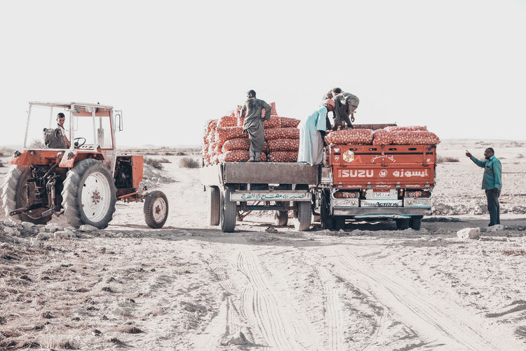 onion gathering at upper egypt The Photojournalist - 2018 EyeEm Awards The Traveler - 2018 EyeEm Awards Clear Sky Day Field Group Of People Land Land Vehicle Men Mode Of Transportation Nature Occupation Outdoors People Real People Sky Snow Tractor Transportation Winter Working