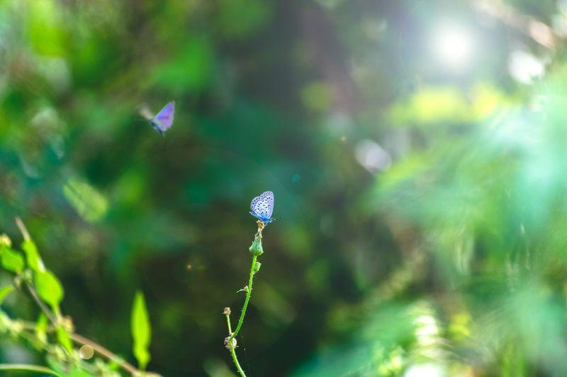 bttufly Plant