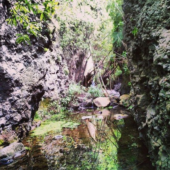 Azuaje GranCanaria Caminatas Senderismo Lovecanarias Sensaciones Firgas @Canarias_Free @LPASHOOTERS @EmocionesCan