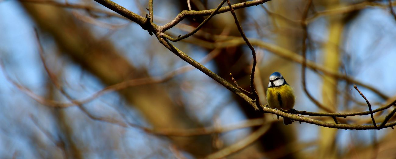 Birds Photography Photographer Marburg An Der Lahn Germany Cute Nature Awesome Spring Beauty