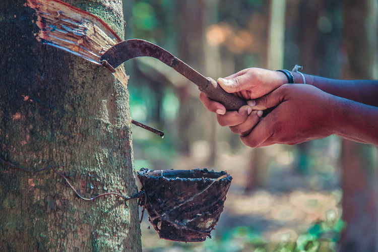 Cropped image of hand cutting tree