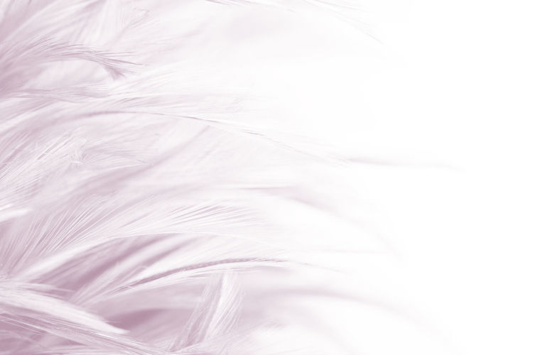 Backgrounds Textile White Color Softness Textured  Full Frame No People Hair Pattern Bed Swirl Elégance Close-up Indoors  Abstract Sheet Copy Space Extreme Close-up Studio Shot Nature Lightweight Abstract Backgrounds Flowing Textured Effect