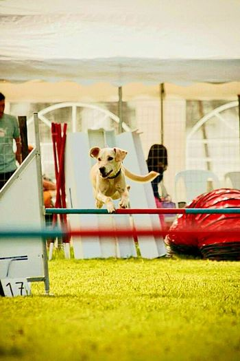 FLYING DOG Pets