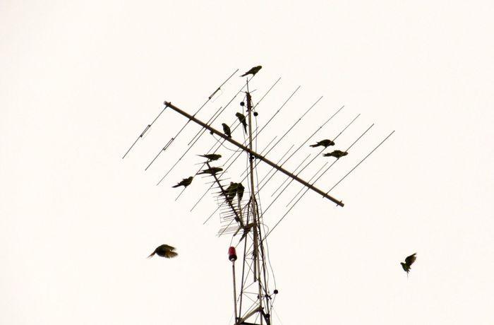 Minimalism Birds Urban Birds Silhouette