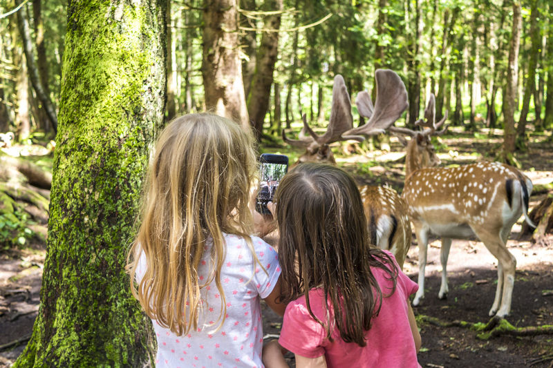 Kids observing the deer in the woods Bavaria Deer Kindergarten Learning Recreation  Reindeer Wood Zoo Adventure Animal Animal Themes Antler Child Discovery Education Forest Girl Girls Lifestyles Mammal Nature Observing Outdoor Outdoors Tree