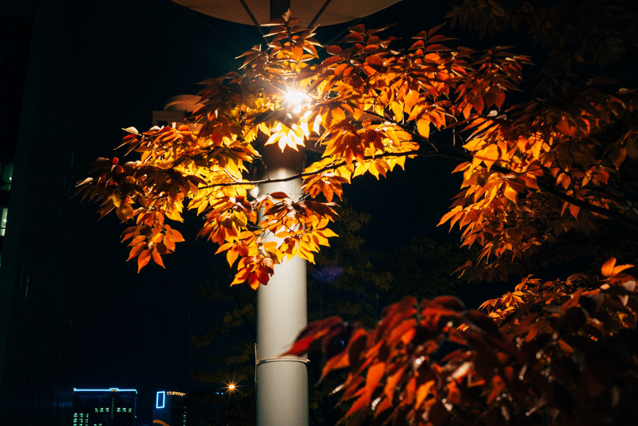 Low Angle View Of Tree And Illuminated Street Light At Night