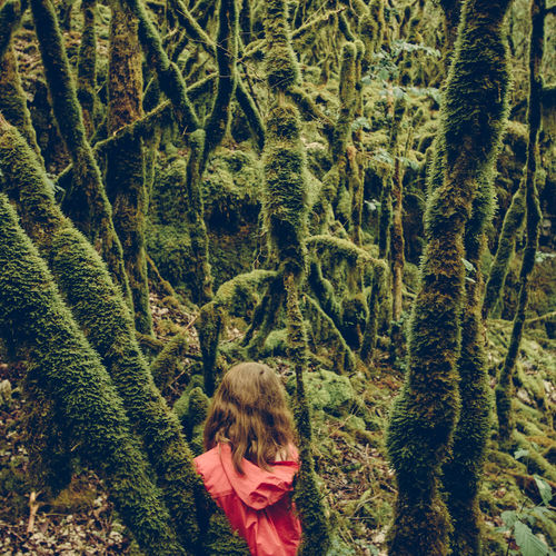 High angle view of girl amidst plants in forest