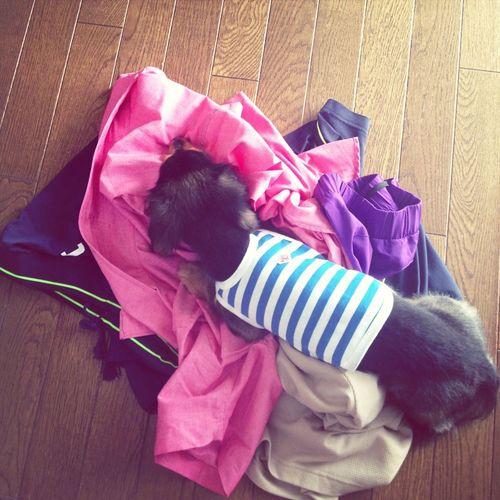 洗濯物の上で落ち着いたヒト。