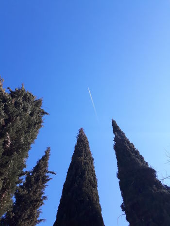 low angle view of tree tops against blue sky and flying airplane trail Beauty In Nature Blue Clear Sky Copy Space Day Growth Low Angle View Nature No People Non-urban Scene Outdoors Plant Scenics - Nature Sky Space Tranquil Scene Tranquility Tree Vapor Trail