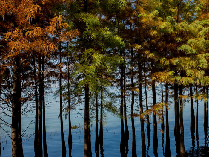 Trees by lake in forest against sky