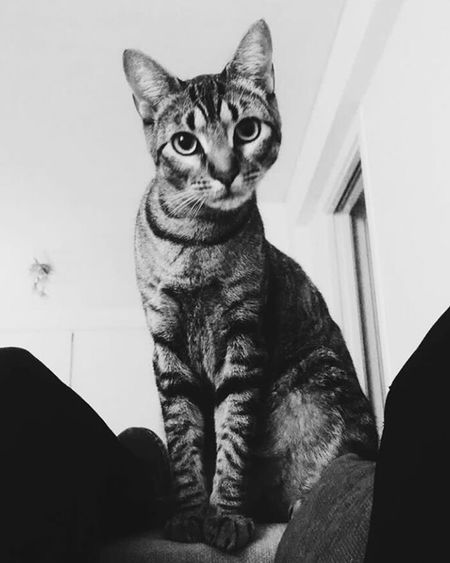 ojala seas eterna solcita❣☹ Animales Perfectos Gatoslindos first eyeem photo