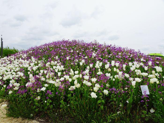 Flower Head Flower Rural Scene Flowerbed Sky Close-up Landscape Plant Cloud - Sky In Bloom Blooming Plant Life