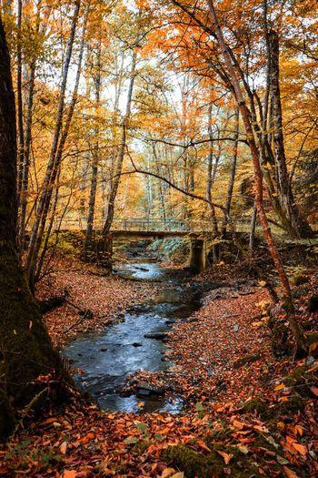 Naturbilder Landscape Skyline View Fotografieren Hobbyfotograf Pic Picoftheday Canon Eos750d Dorfkind Landliebe Landleben Tree Forest Branch Autumn Water Sky