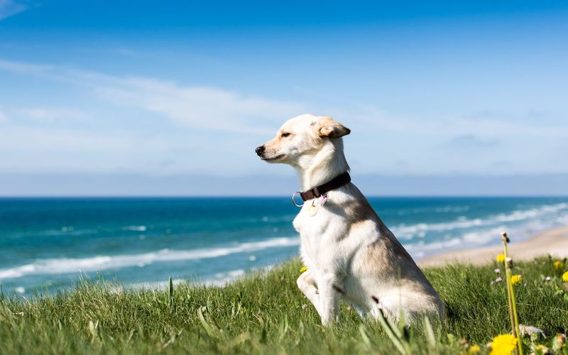 Side view of dog standing on grass at beach against sky