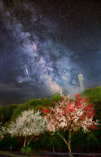 Milkyway and blossoms Astronomy Beauty In Nature Blossoms  Cloud - Sky Milky Way Nature Night Plant Scenics - Nature Sky Space Star - Space Tree
