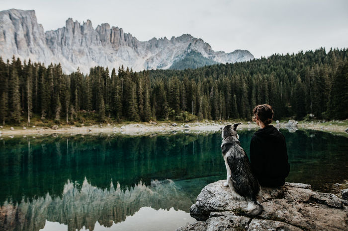 Rear view of woman sitting with dog by lake at forest