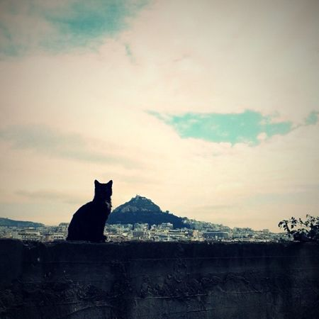 The view from afar. Athens Lycabettus Anafiotika Cat Catoftheday Wpphoto