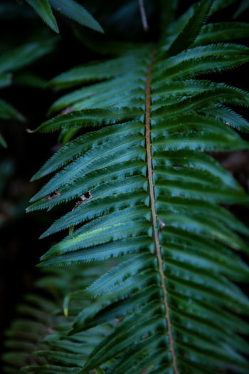 Backgrounds Beauty In Nature Close-up Day Dew Fern Focus On Foreground Freshness Full Frame Green Color Growth Leaf Leaves Natural Pattern Nature No People Outdoors Palm Leaf Pattern Plant Plant Part RainDrop Selective Focus Spiky