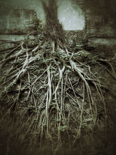 Wonderful old tree taking over a wonderful old wall! Guangzhou Yuexiu Park, Guangzhou Yuexiu Guangdong Guangzhou,China Guangzhou China  Guangdong China Tree Trees TreePorn Roots Of Imagination Tree_collection  City Walls Tree Porn Tree Art Chinese Tree Roots  Trees Collection Roots Of Life Treecollection Tree Of Life Tree Junkie Root Roots China