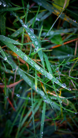 Backgrounds Beauty In Nature Close-up Day Drop Fragility Freshness Full Frame Grass Green Color Growth Leaf Nature Needle No People Outdoors Plant Water