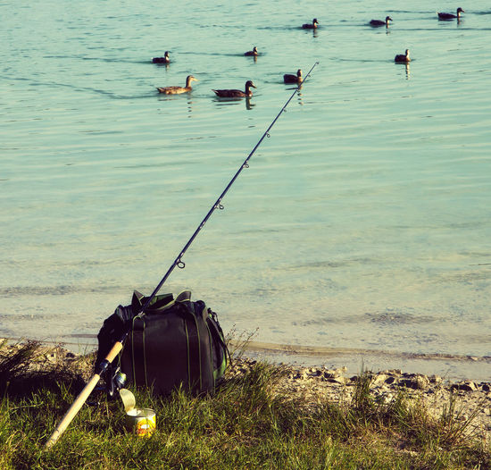 leisure time at the lake, fishing with the pole while ducks swim around. Bait Beauty In Nature Day Ducks In Water Fish Pole Fishing Grass High Angle View Lake Leisure Activity LINE Lure Nature No People Outdoors Recreational Pursuit Rod Shore Sport Sportfishing Swimming Tranquility Water Waterfowl Wildlife