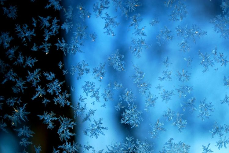 Frost Beauty In Nature Close-up Cold Temperature Frosty Glass Frosty Mornings Nature Snowflake Snowflakes Winter Perspectives On Nature
