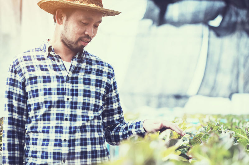 Male Farmer Touching Crops Growing In Greenhouse