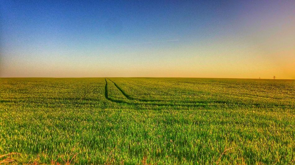 Rural Scene Sunset Nature Beauty In Nature Agriculture Field Crop  Farm Scenics Clear Sky Growth Tranquility Landscape Sunlight Tranquil Scene Sky Yellow No People Outdoors Cereal Plant