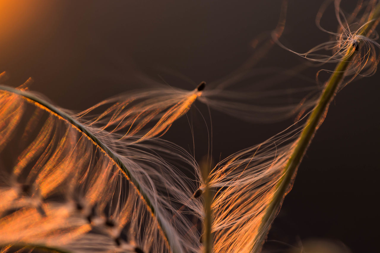 Beauty In Nature,  Brown,  Close-Up,  Crop,  Focus On Foreground