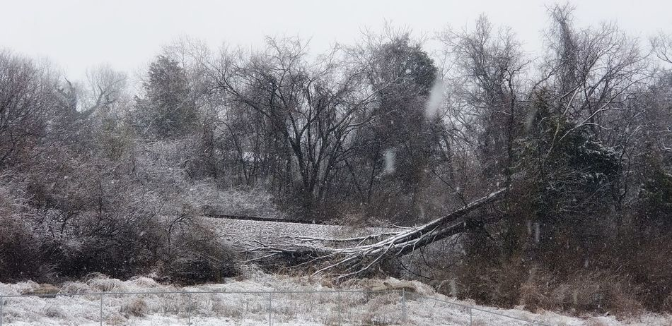 Fallen trees are no less beautiful than the standing ones BareTrees Fallen Tree Railroad Track Snowfall Tree Water Sky Snow Covered Snowcapped Snow Weather Weather Condition Winter Cold Temperature Cold Covering