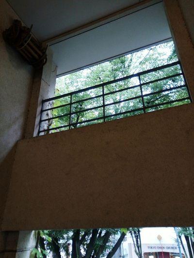 表参道ヒルズ同潤館の階段の窓からの表参道。東京ユニオンチャーチも見えます Tree Nature Sunlight Window Omotesando Tokyo Japan Apartment History Building Architecture Historic Building Architectural Design