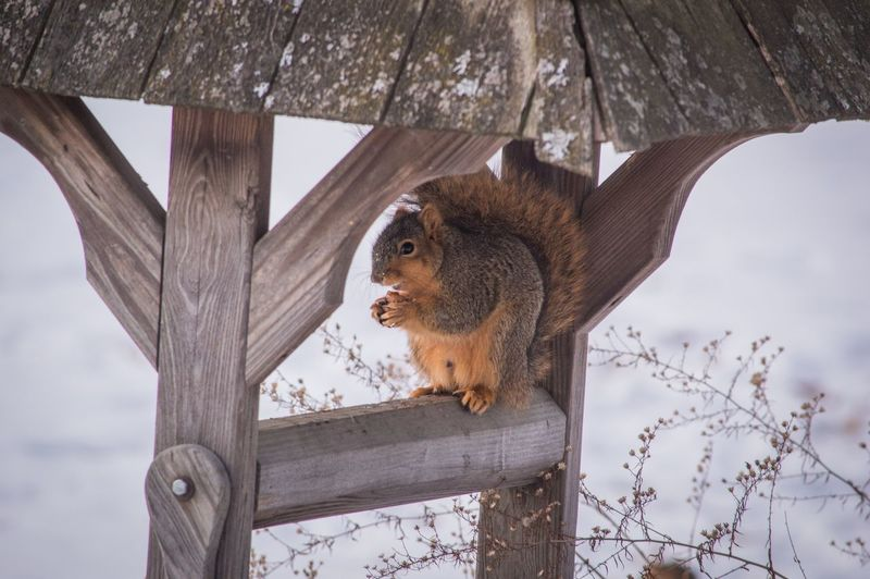 Low angle view of animal sitting on tree