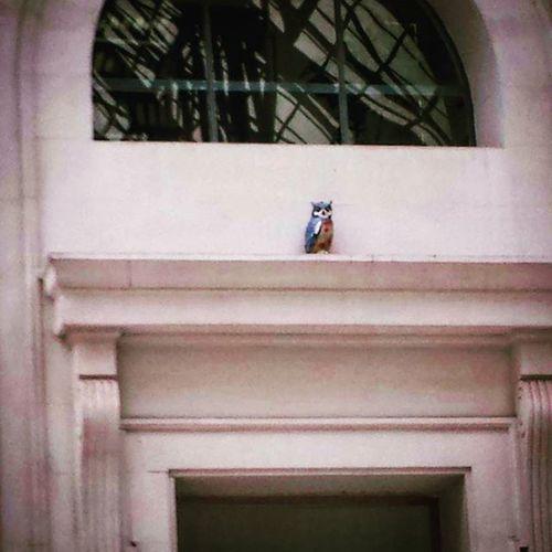 Vigilant nocturn | Vigilante nocturno | Nightwatcher Owl Owl Art Train Station Watcher Barcelona