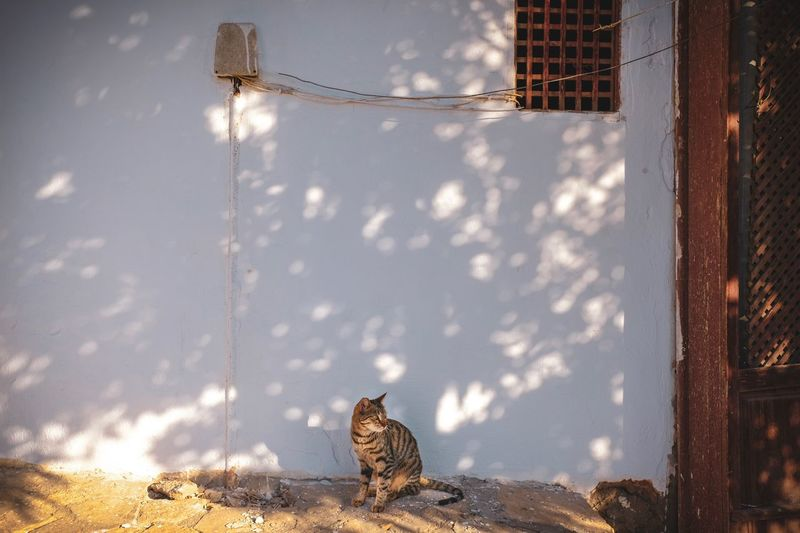 View of a cat on the wall