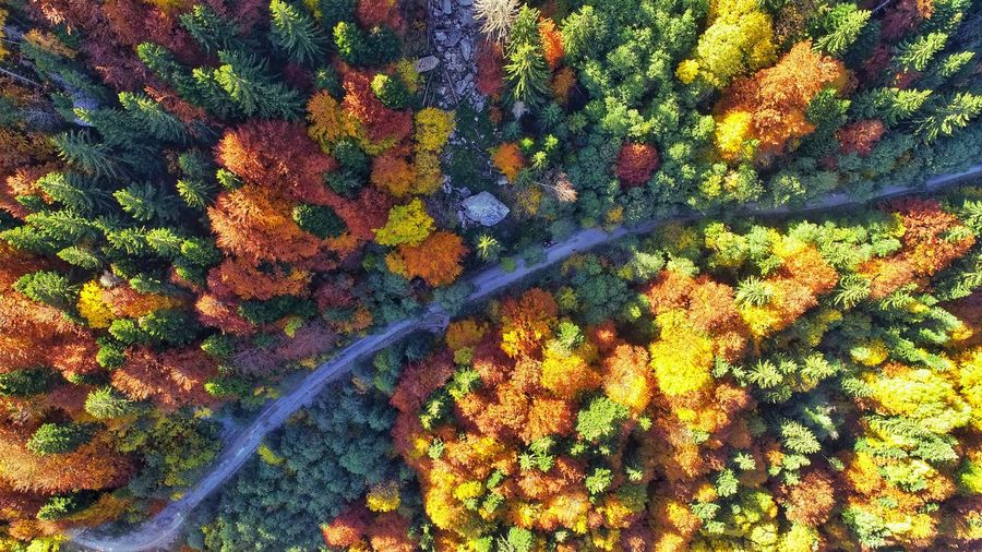 Aerial Photography Picea Abies River Aerial View Cars Aerial Shot Summer Exploratorium Forest Photography Nature Photography EyeEmNewHere EyeEm Nature Lover EyeEm Selects EyeEm Best Shots Forestphotography My Best Travel Photo Forest Trees Autumn colors A New Beginning Tree Full Frame Multi Colored Backgrounds Forest Close-up Plant