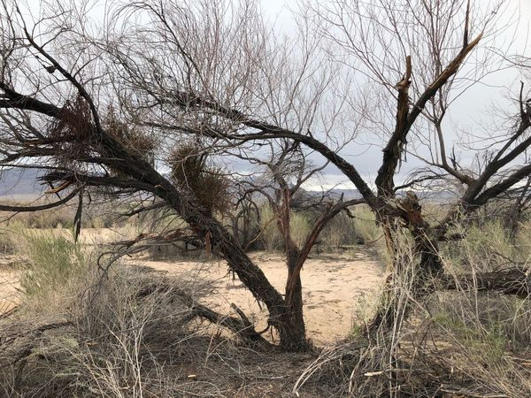 Bare Tree Tree Landscape Nature Branch Beauty In Nature Outdoors No People Dead Tree Arid Climate Desert Scenics