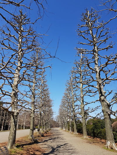 Bare Tree Blue Branch Clear Sky Day Diminishing Perspective Direction Footpath Land Nature No People Outdoors Plant Road Sky Sunlight The Way Forward Tranquility Tree Treelined vanishing point