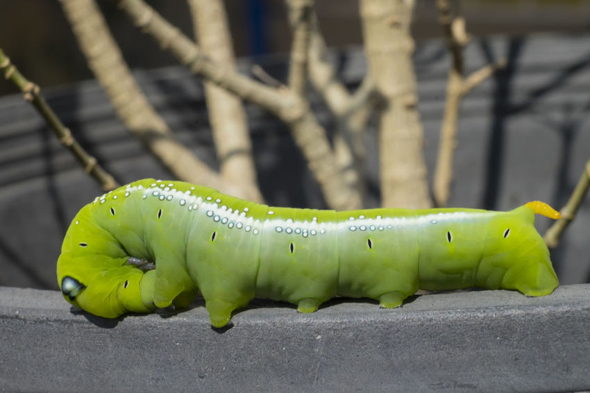 Animals In The Wild Green Caterpillar Green Color Nature Outdoors Yellow