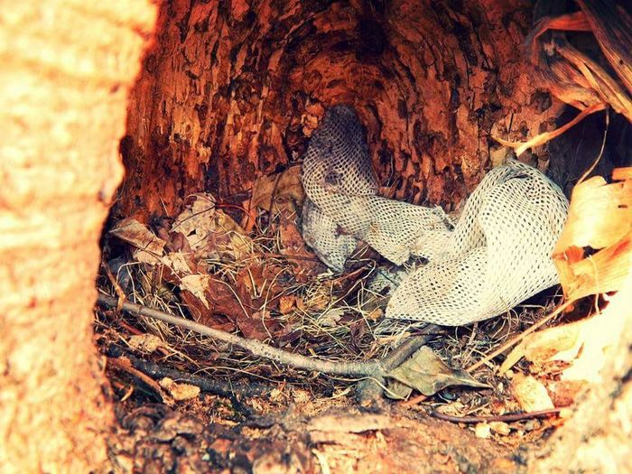 Squirrel Home Bedding Treefort Canada Ontario Nikon L810 Nature Bark Macro Photography Maple Tree