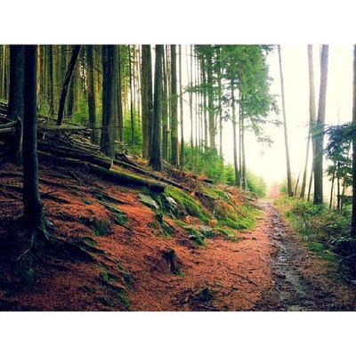 WoodLand Walk Wales Igwales Serene
