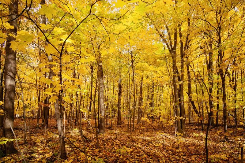 Fall views Tree