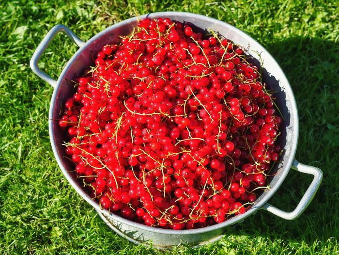 The Essence Of Summer The Essence Of Summer- 2016 EyeEm Awards Red Currant Redcurrant Fruit Fruits Abundance Red Garden Harvest Sweet Sour Sweet And Sour View From Above Summer Picking Berries Temptation Fine Art Photography Showcase July Colour Of Life